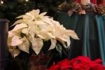 014-christmas-decorations