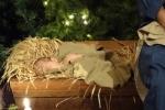 020-christmas-decorations